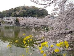鎌倉・谷戸池