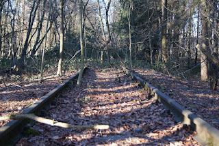 Zugewachsene Bahnschienen im Wald. Inmitten der Gleise wächst ein Baum.