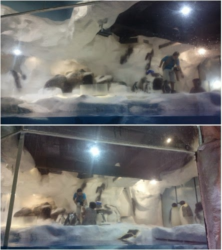 manila ocean park trails to antartica