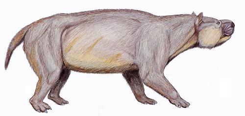 animales extintos de Argentina Carodnia