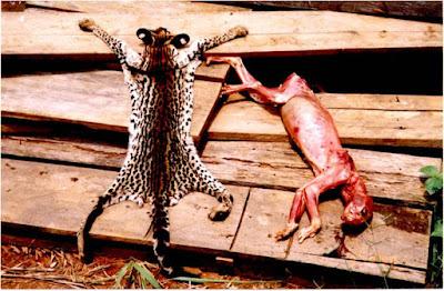 Tráfico de animais silvestres
