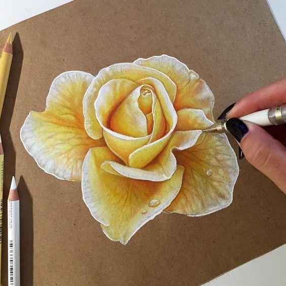 Fotos Lápis para iniciantes: flores