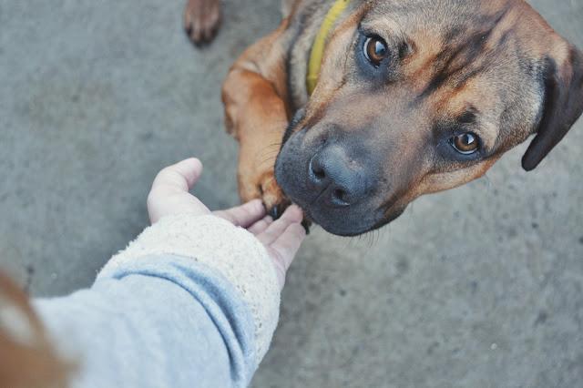 rescue dog image