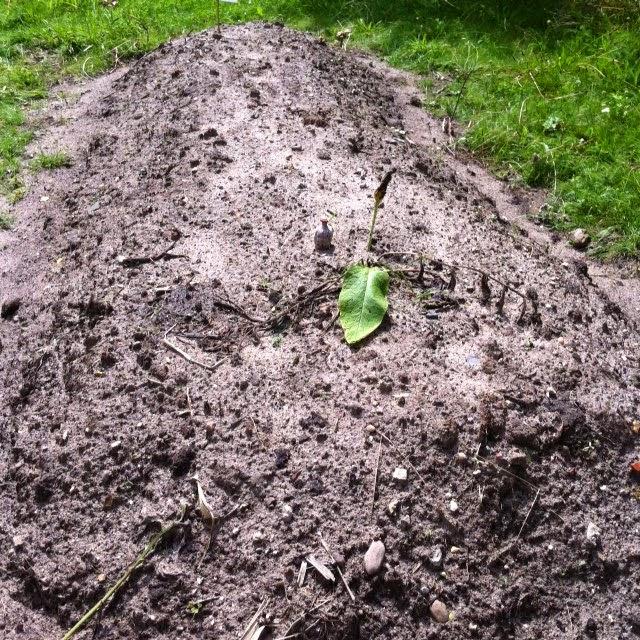 begraven op eigen grond