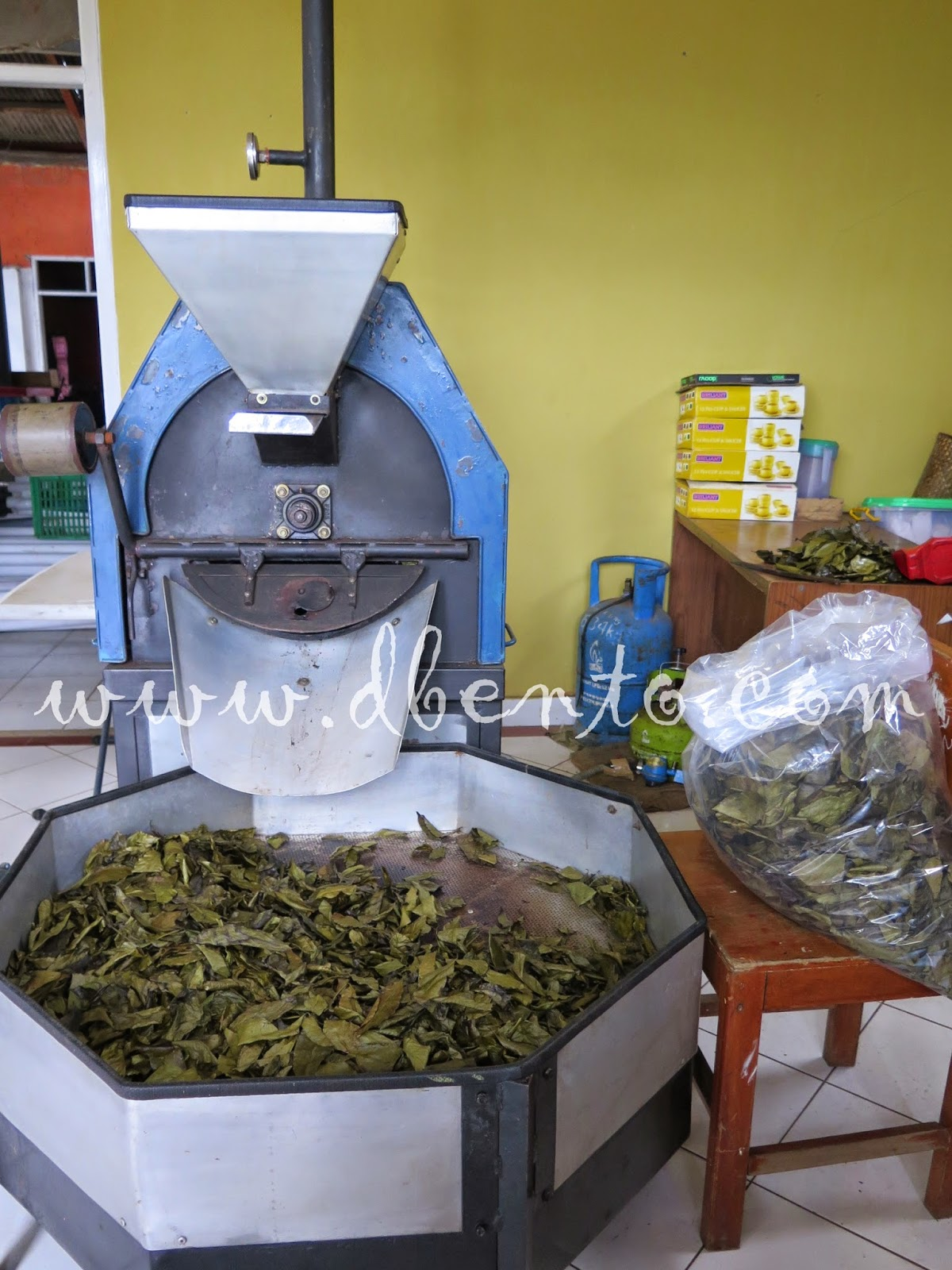 daun kopi yang dikeringkan