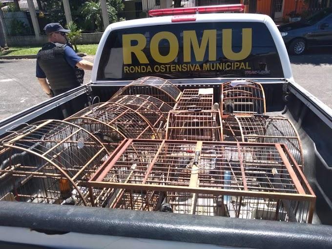 Polícia Civil apreende 70 aves silvestres em local de torneio em Cachoeirinha