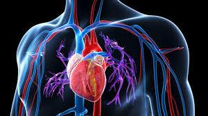 Χρειάζεσαι συγκεκριμένη πίεση ώστε το αίμα να κινείται συνεχώς. Η υψηλή  πίεση-υπέρταση δημιουργείται όταν τα τοιχώματα των μεγάλων αρτηριών του  σώματος ... e1cd5cdeff0