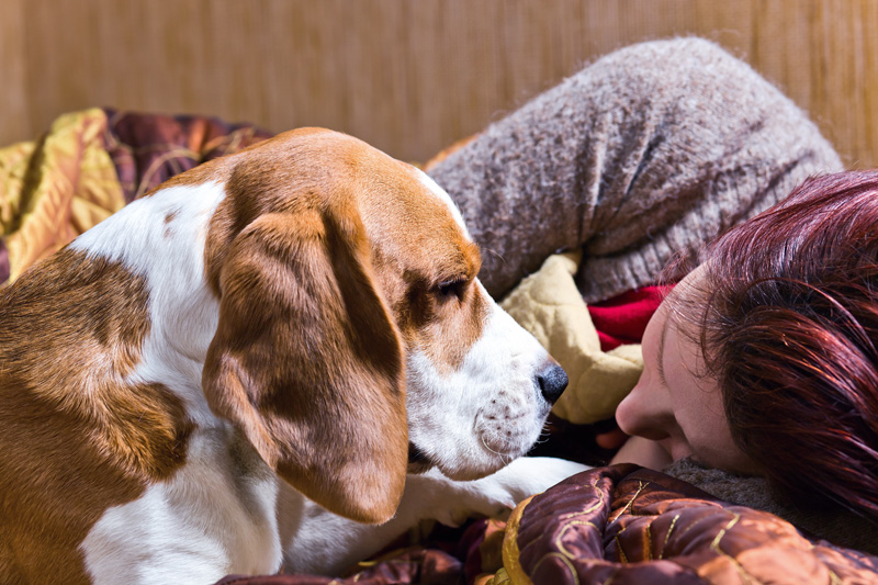 A woman is fast asleep while her beagle lies near her on the bed