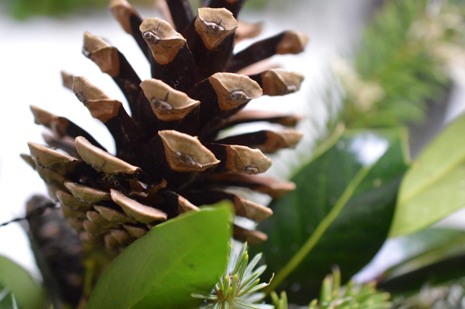 How hard is it to make your own wreath for Christmas?  - pine cones