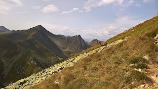 A chamois making its way down to Lago Moro from Corno Stella.