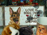 felicitare in vitrina unui magazin: love is being owned by a German Shepherd