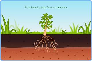 http://www.primerodecarlos.com/TERCERO_PRIMARIA/noviembre/Unidad4/actividades/cono/las_plantas/cono3001.swf