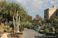 The cactus garden in the town of Holon