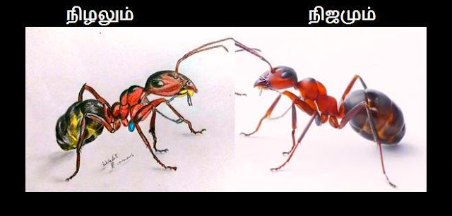 PENCIL DRAWING - FIGHTING ANT