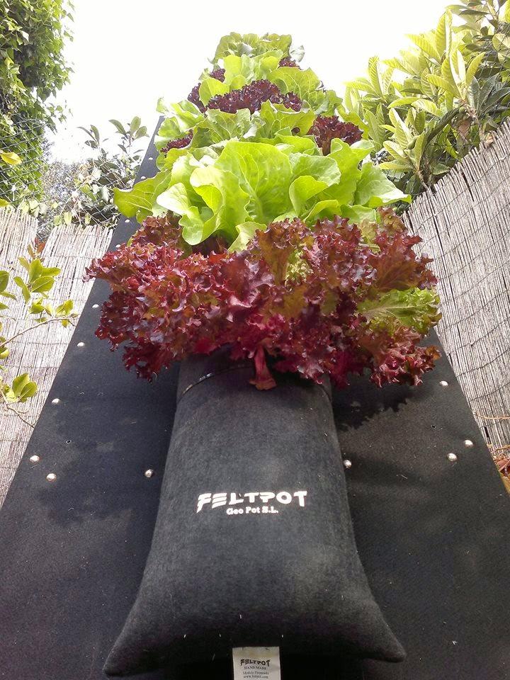 Feltpot2