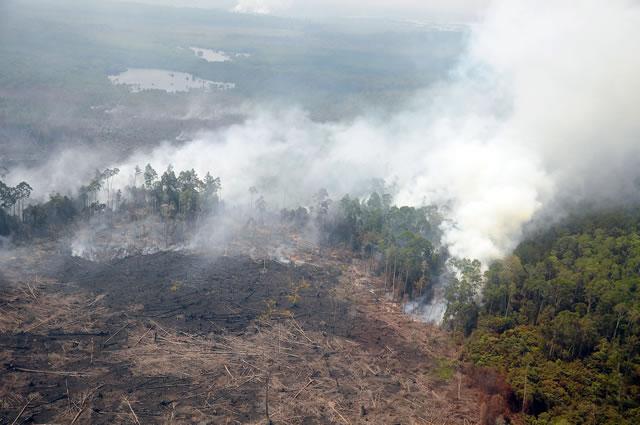Kebakaran Hutan Indonesia