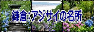 鎌倉アジサイ情報