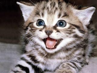 Molly Kucing yang Terlupakan