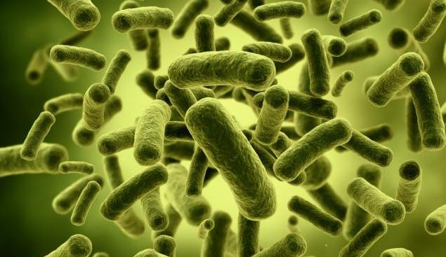Perbedaan Probiotik dan Prebiotik yang Perlu Anda Tahu