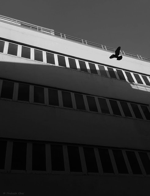 A Black and White Minimalist Photograph of a Bird in the sky shot via Samsung S6 Smartphone Camera