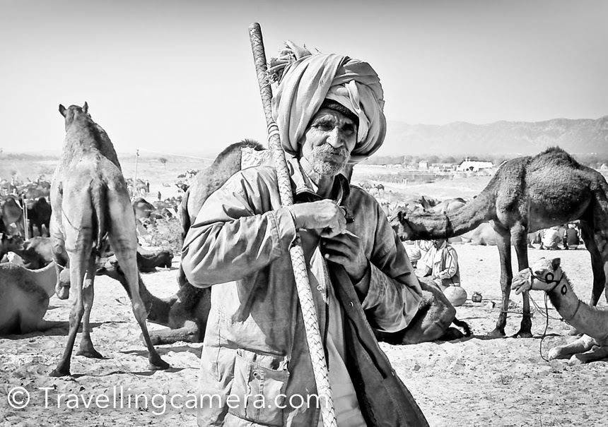Camel trader at International Camel Fair in Pushkar, Rajasthan, India