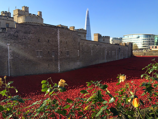 Poppies - Tower of London