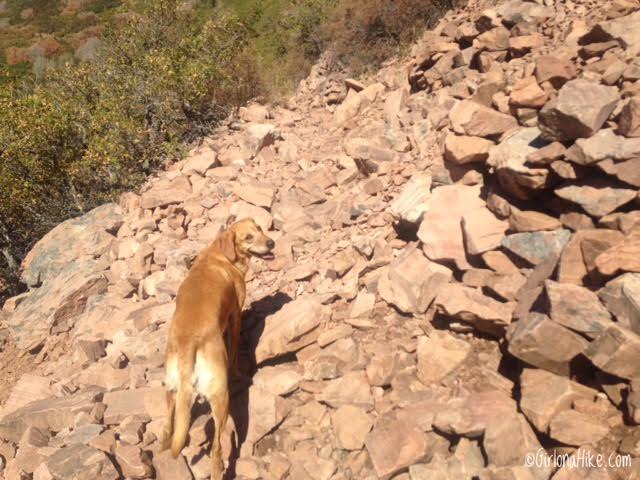 Hiking to Grandeur Peak, Millcreek Canyon, Utah, Hiking in Utah with Dogs