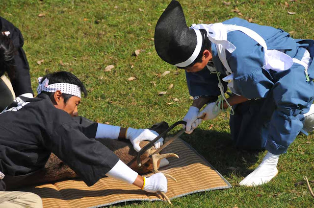 Deer-horn Cutting Ceremony, Nara