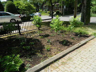 Mount Pleasant West Toronto garden renovation removing lawn after by Paul Jung Gardening Services