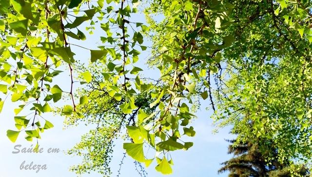Beneficios  e propriedades do Ginko biloba