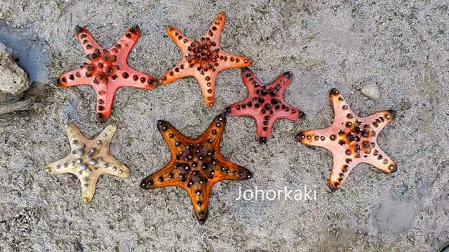 Johor-Kaki-Star-Rating-Format