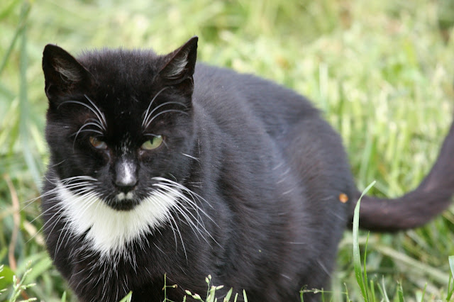 the feral cat known as X-Ray Hitler stares us down