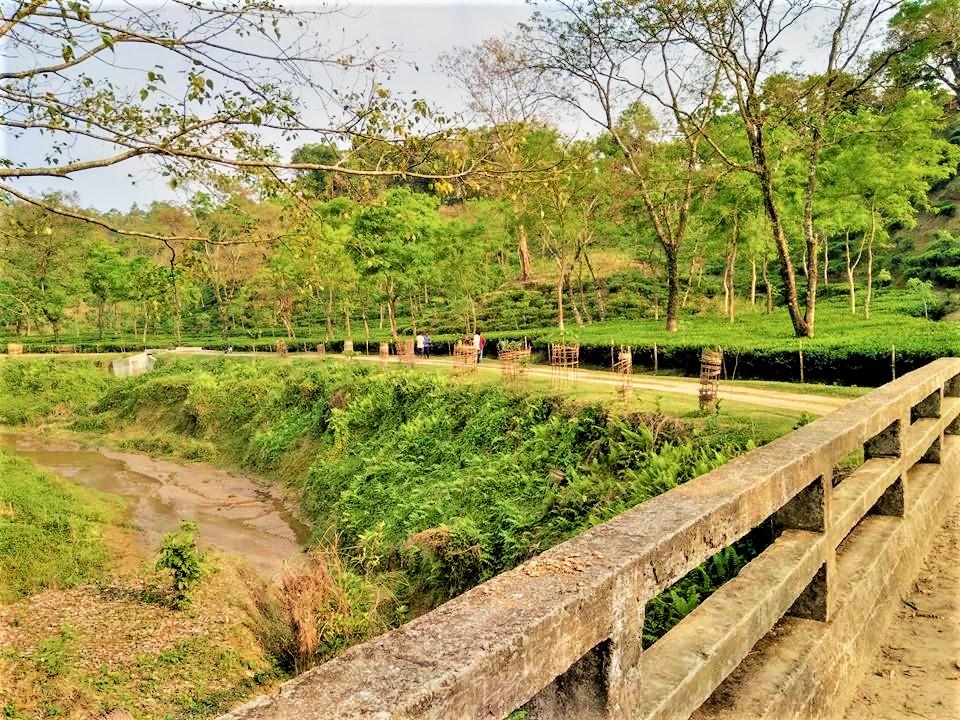 Lalakhal tea garden