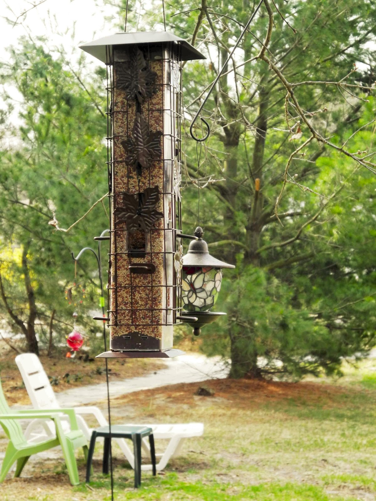 Squirrel Chair Feeder Teak Folding Chairs Birds And Words Our Bird Buffet