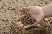 usaha perkebunan, bisnis perkebunan, perkebunan yang menguntungkan, peluang bisnis perkebunan, perkebunan, pupuk, pupuk kebun, pupuk kandang