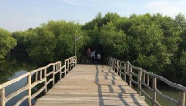 jembatan taman wisata alam kapuk