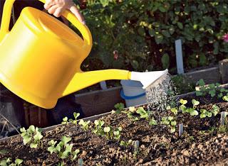 http://handmade.parafraz.space/ Заговоры для ухода за растениями
