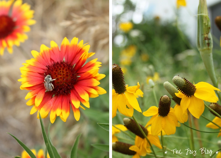 Bug & Wildflowers // Independence Day in Small Town America // WWW.THEJOYBLOG.NET