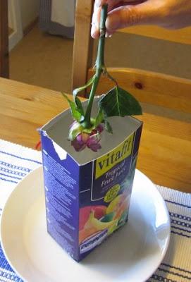 Jäädytettyjä kukkia ja ohje.jpg