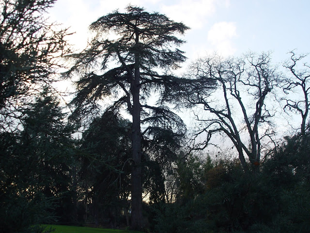 jardin-botanico-atlantico