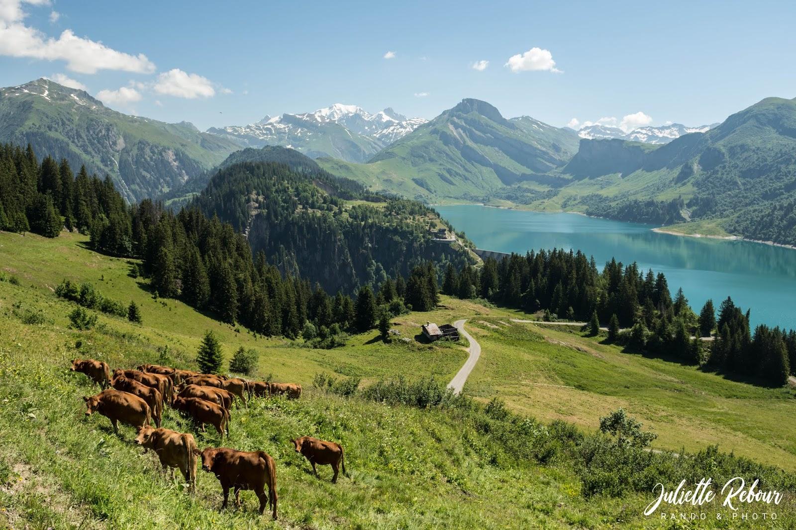 Lac de Roselend, alpage et Mont Blanc