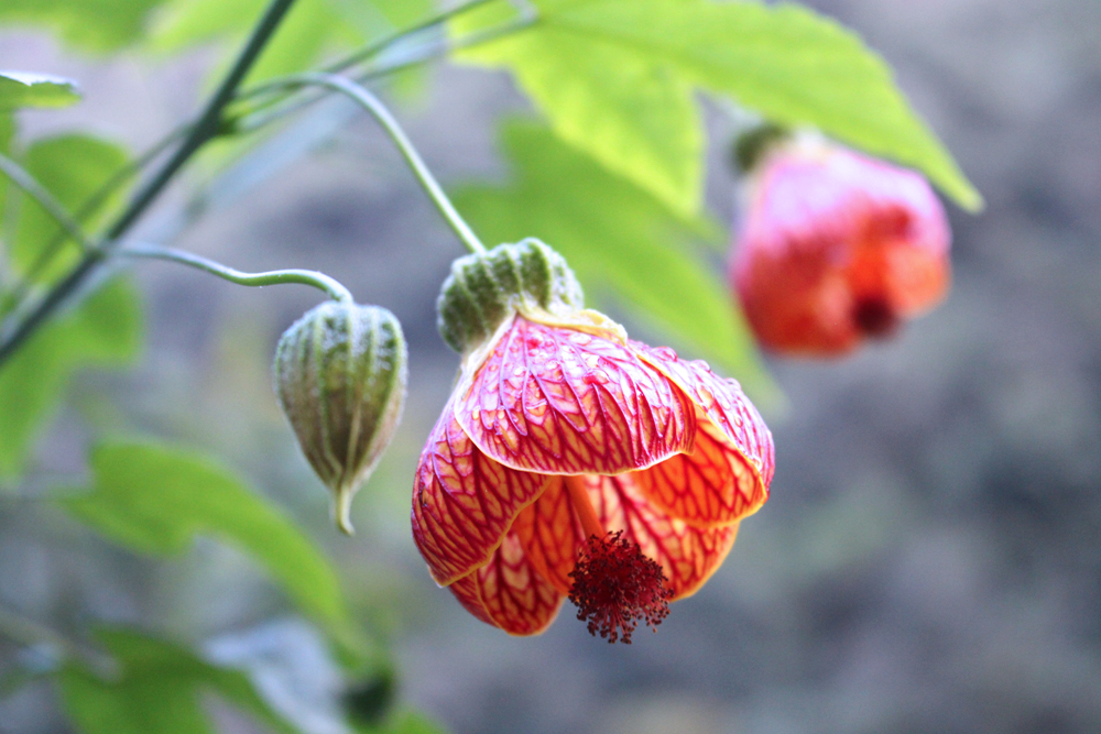 Flowers at Aguas Calientes, Peru - lifestyle & travel blog
