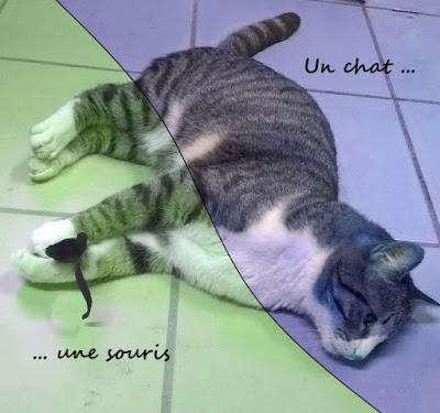 Chat versus souris !