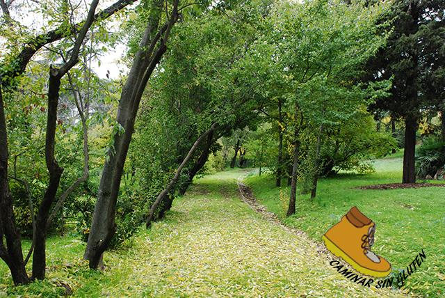 Camino otoñal en Quinta de Torre Arias
