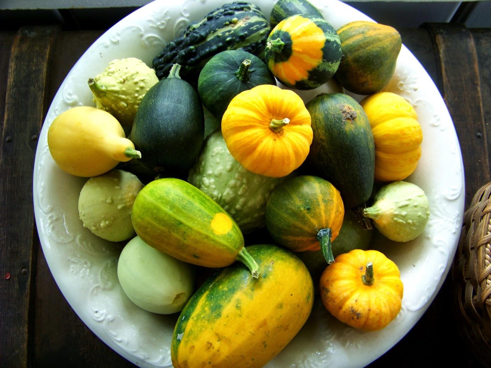 Gourds B