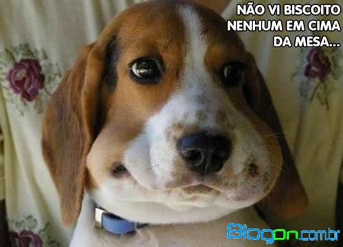 Imagens Com Frases Engraçadas De Animais Para Facebook