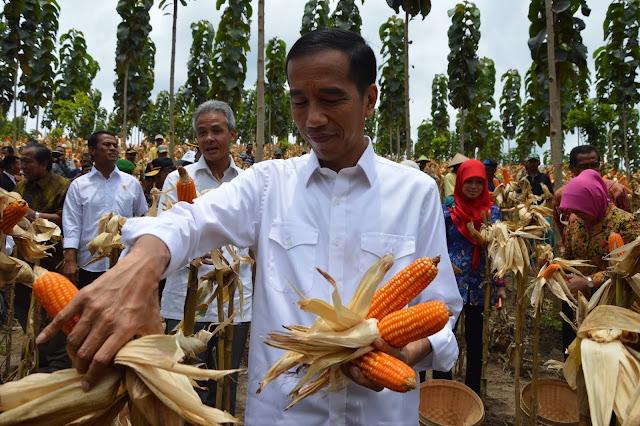 Ekonom: Impor Jagung untuk Turunkan Harga Daging Ayam