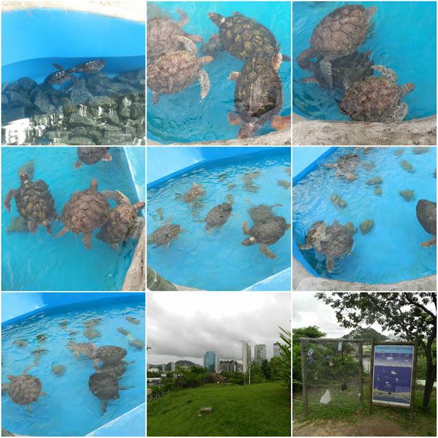 Projeto Tamar em Vitória (ES)