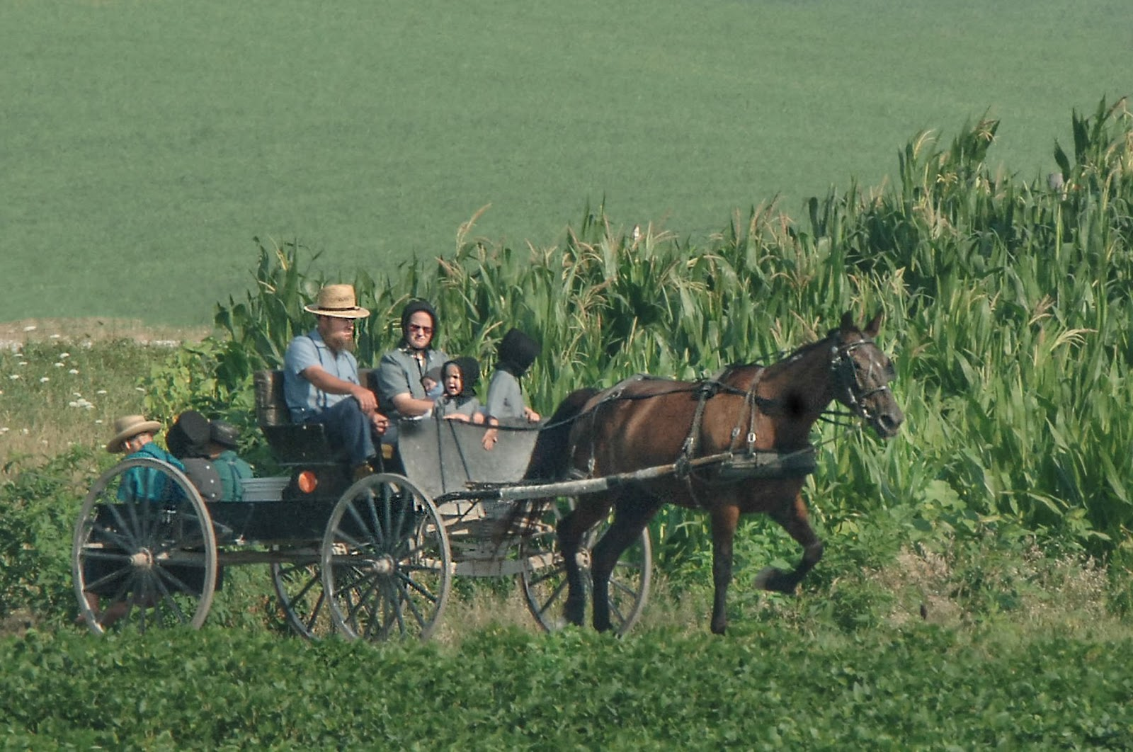 amish life southern rural sociology The department of rural sociology participates in the bachelor of rural society, social structure of the amish topics include cultural symbols, life.