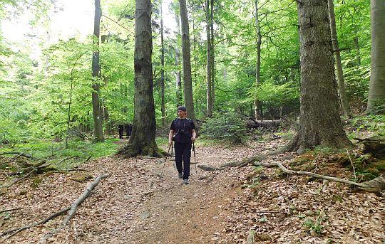Schodzimy niżej łagodnym stokiem leśnym.